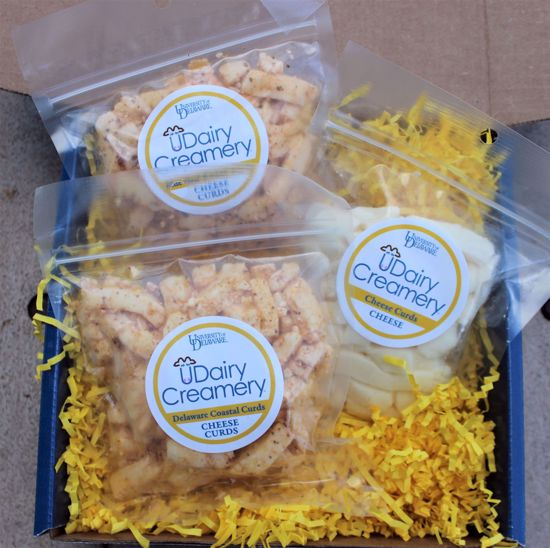 Picture of Cheddar Cheese Curd Gift Box